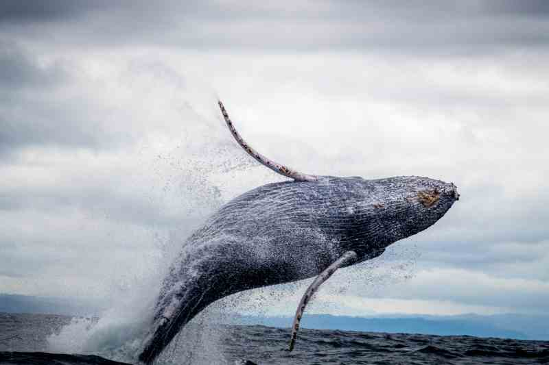 Best Whale watching Alaska