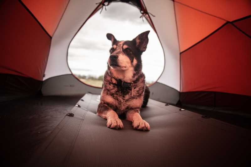 Camping with a Happy Dog