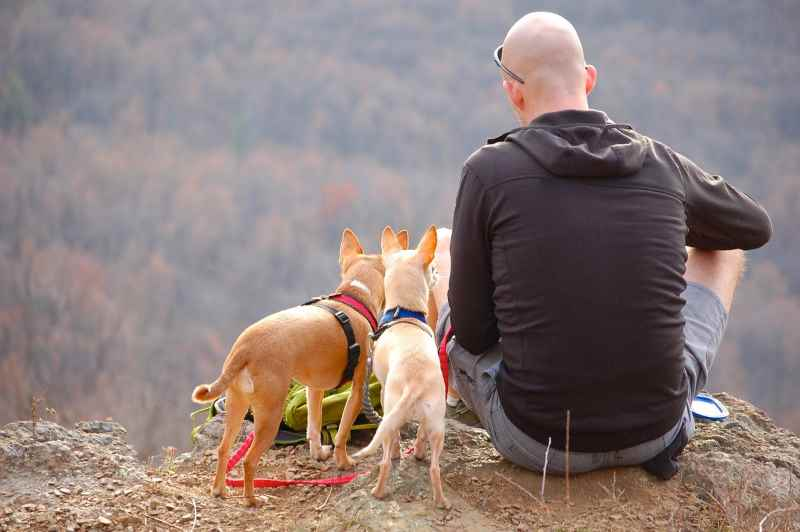 Relaxing on the Trail with the dogs
